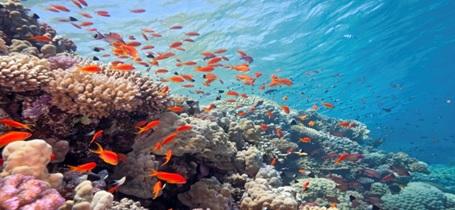 Las sales del mar Rojo: una combinación de ciencia y naturaleza