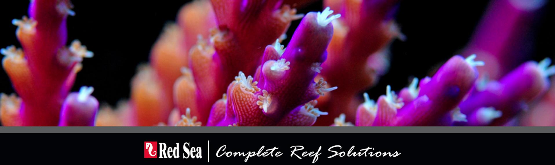 redsea-imagen-1